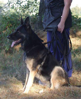 Training_Chantal staat klaar met haar hond Fadah voor het speuren