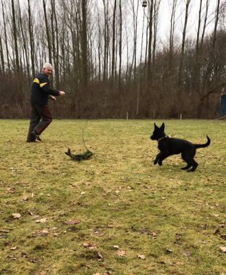Training_Pakwerker Huub plaagt pup