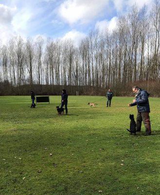 Training_pups tijdens de training