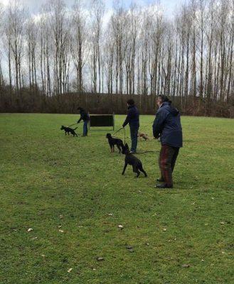 Training_pups worden geplaagd bij pakwerk