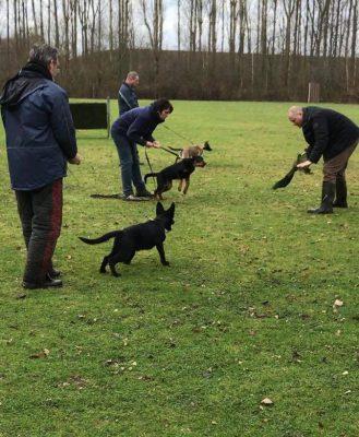 Training_pups worden geplaagd tijdens pakwerk