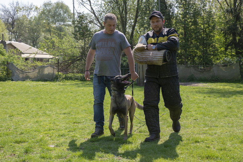 Bas met hond tijdens pakwerk