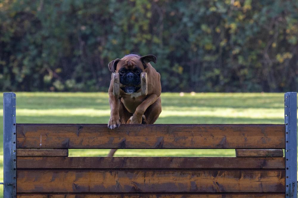 Boxer Sixx springt met blok over de haag